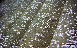 桜の写真3枚目